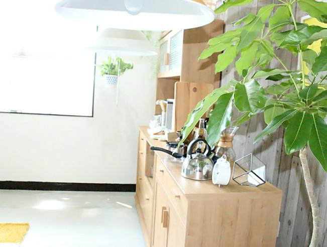 私の好きな観葉植物を取り扱うお店をご紹介♪